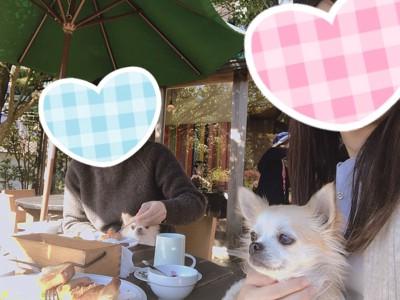 テラス席に一緒に座る犬の写真