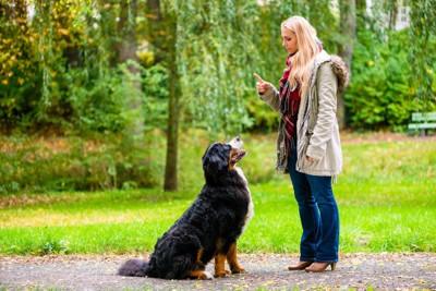 女性にしつけを受ける犬