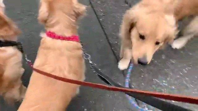 2匹後ろ姿一匹正面の犬