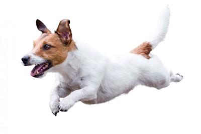 走り跳ぶ犬