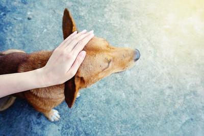 上から犬の頭を撫でる人の手