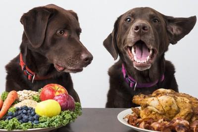 野菜と肉を前にした2頭の犬