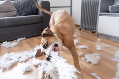 羽毛を散らかしている犬