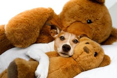 大きなクマのぬいぐるみの間で横になる犬