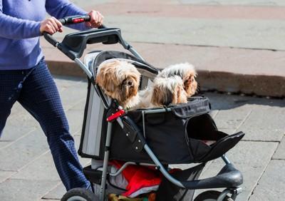 一緒にカートに乗ってお散歩する三頭の犬