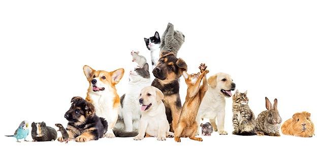 たくさんの動物