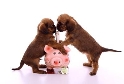貯金箱と2匹の犬