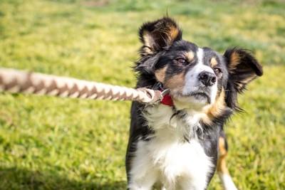 リードを引いて抵抗している犬