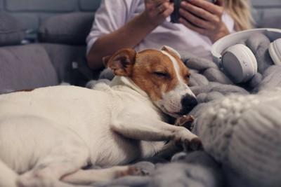 女性に寄りかかりながら眠る犬
