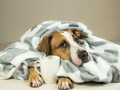 毛布から顔と両手を出した犬