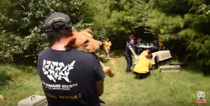 多頭飼育崩壊現場で犬の救助活動