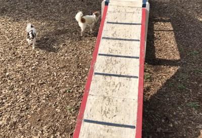 犬2匹とウッドチップ