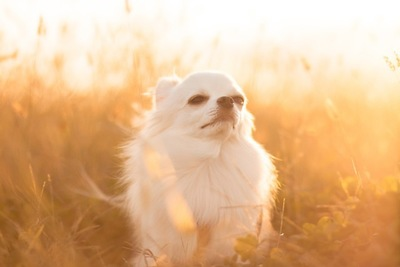 夕日に包まれている犬