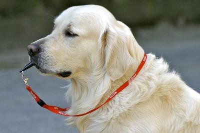 犬笛を咥えている犬