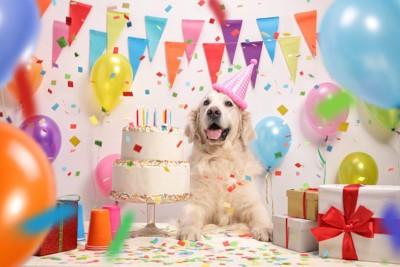 飾り付けされた部屋でケーキの前に座る犬