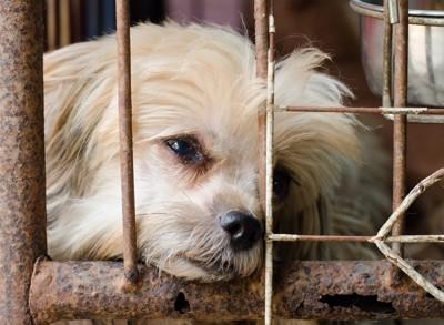 殺処分を待つ犬