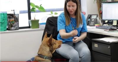 デスクの前の女性と座った犬