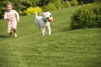 走る犬と子ども