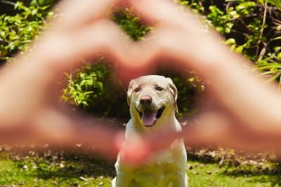 犬のために手で作ったハート
