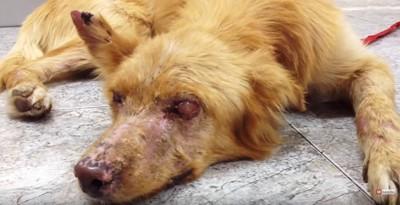 施設の床に横たわる病気の犬