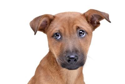 目をそらしている子犬