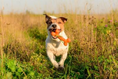 骨のおもちゃと犬