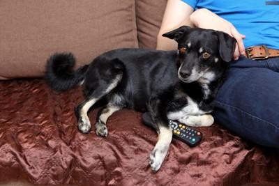 ソファでテレビを見ている犬