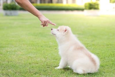芝生に座る子犬を叱る飼い主の手