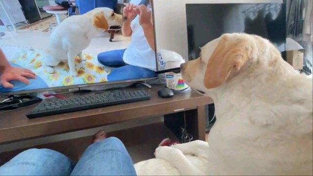 画面見る犬