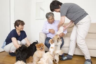 たくさんの犬と遊ぶ家族