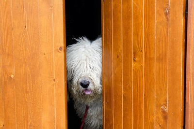 扉の隙間に隠れている犬