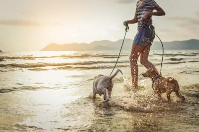 海辺を走る2頭の犬と飼い主
