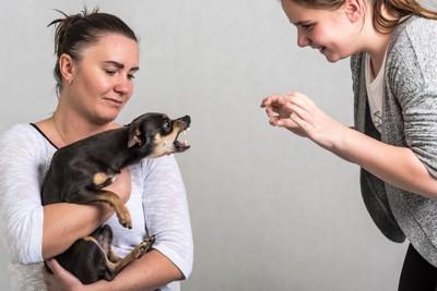 女性に威嚇する抱っこされた犬