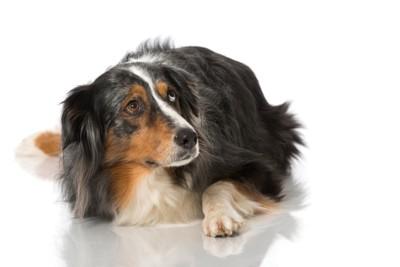 不安そうに見上げる犬