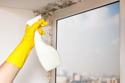 壁のカビを掃除する人の手