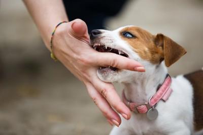 人の手を咬む犬