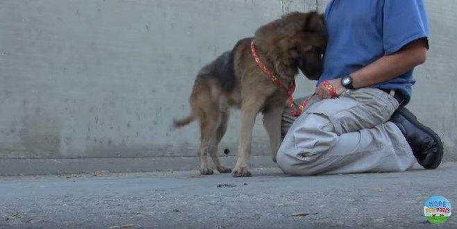 愛情を示す犬