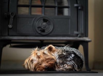 ストーブの前で寝ている犬