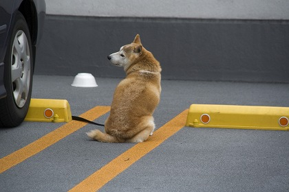 駐車場の犬