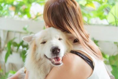 長毛の白い犬を抱きしめる女性