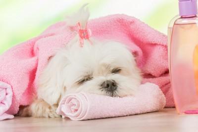 ピンクのタオルと眠る犬