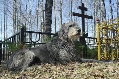 ペット霊園で伏せている犬