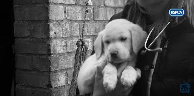 腕に抱かれた子犬