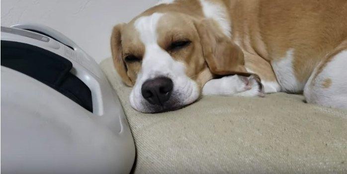 眠るうぃるくん
