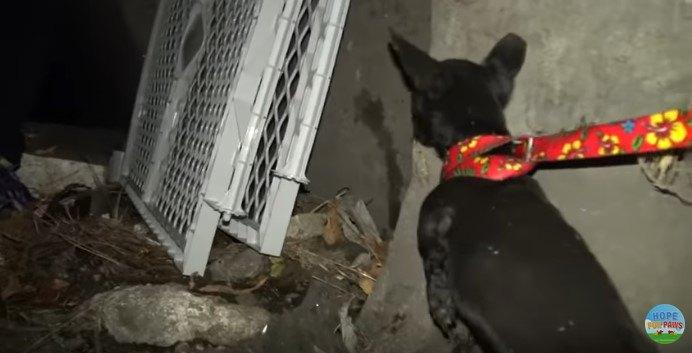出口に向かう犬