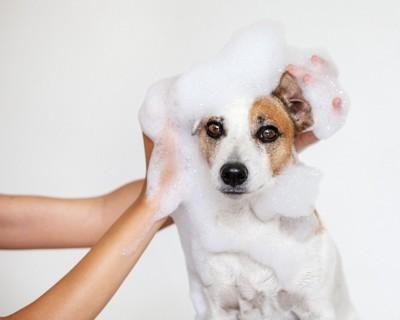 シャンプーされている犬