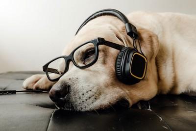 ヘッドホンをしている犬の写真