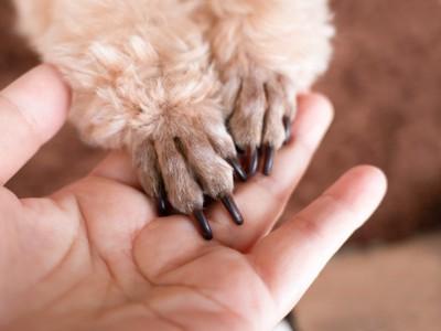 犬の前足と人の手