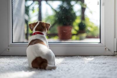 玄関に座る犬の背中