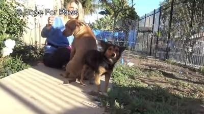 ピットブルの横に立つ犬